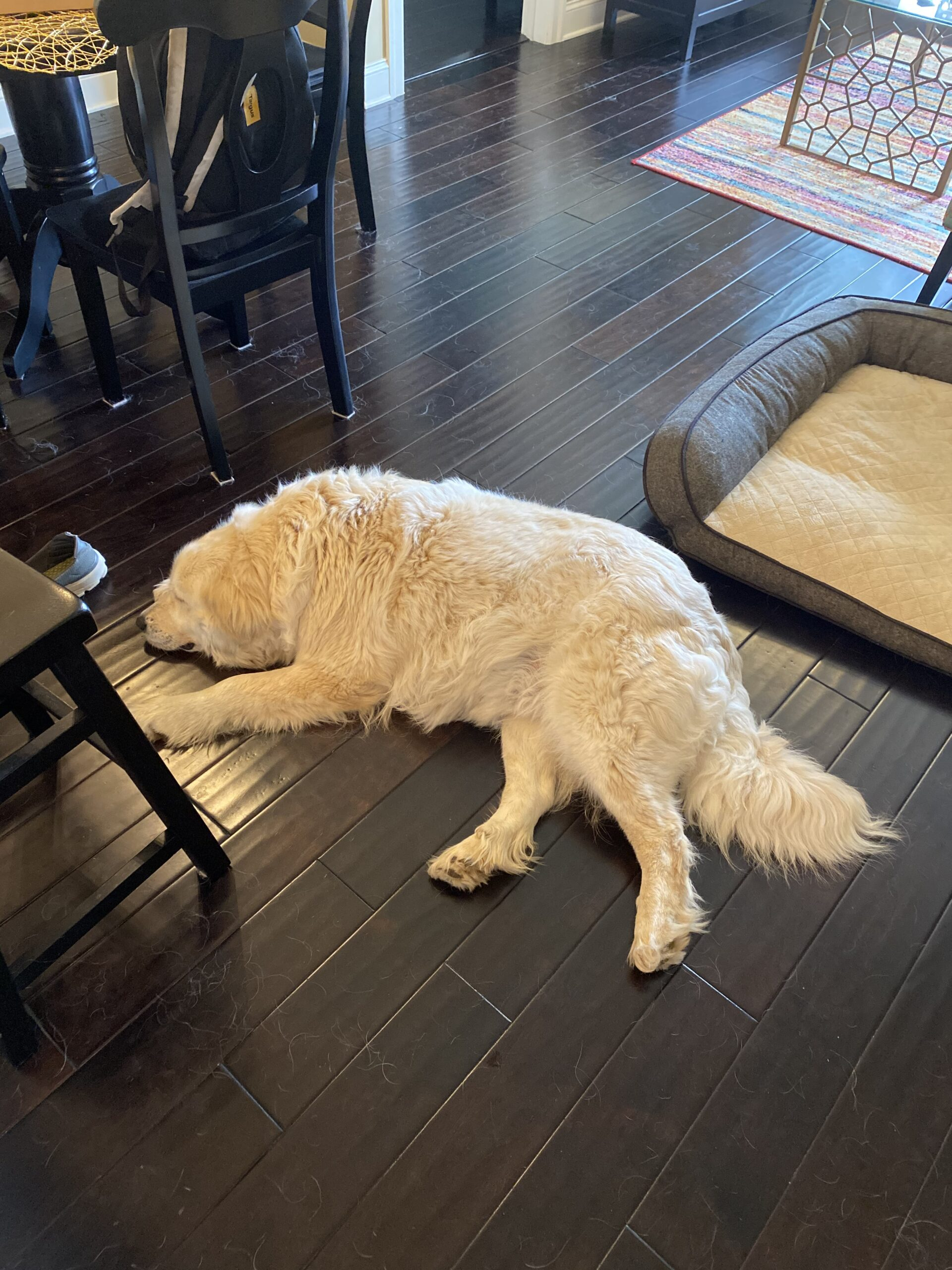 Pyrenees Rescue Dog